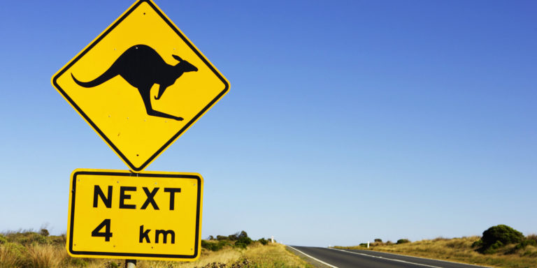 Great, Now Kangaroos Are Jumping Cyclists