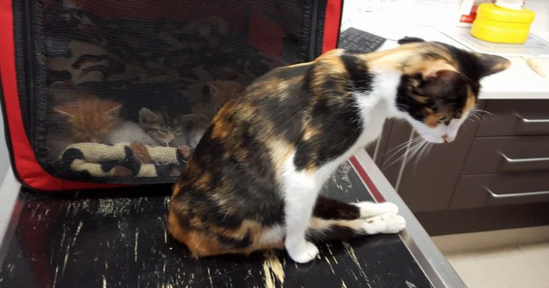 Paralyzed Cat Drags Herself To The Spot She Left Her Kittens After Neighbor Tried To Kill Her