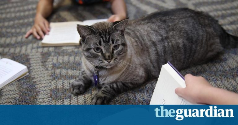 Browser the library cat escapes eviction amid international outcry