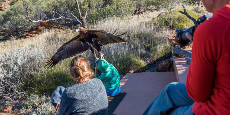 Eagle Tries To Carry Off Small Child During Bird Show