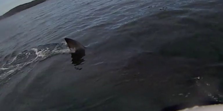 Kayaker Films Heart-Stopping Moment A Massive Shark Circles His Boat