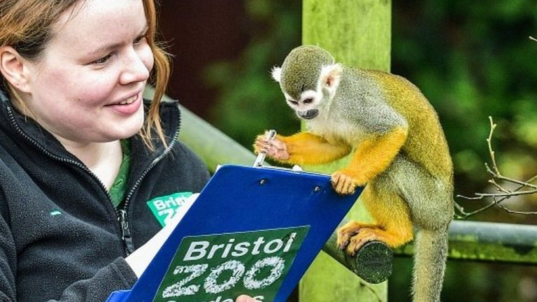 Bristol zookeepers begin annual animal count – BBC News